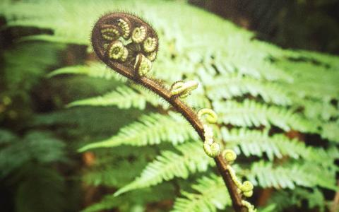 New Life Koru by Philip Wynands Windsor Gallery